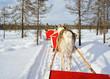 Reindeer Safari Sledge Winter Forest in Rovaniemi Finland Lapland
