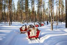 Reindeer Safari Sledding In Winter Forest At Rovaniemi Finland Lapland