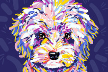 Colorful Curly Pooch