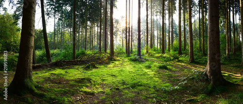 Garden Poster Forest Beautiful forest panorama with bright sun shining through the trees