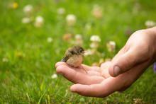 Little Bird On The Hand Of A Boy