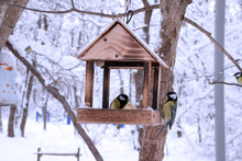 Birds In The Bird Feeder