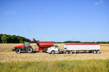 Tractor Emptying Its Load Of Harvested Corn