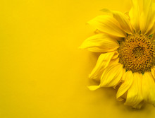 Sunflower Flower On A Yellow Background
