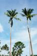 Tropical palm tree with blue sky on the beach and sea