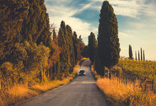 Typical Tuscany Road Along Cyp...