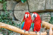 Portrait Of Two Parrots