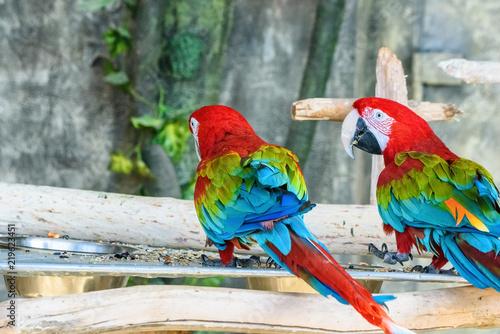 Staande foto Papegaai portrait of two parrots