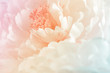 canvas print picture - Chrysanthemum flowers in soft pastel color and blur style for background