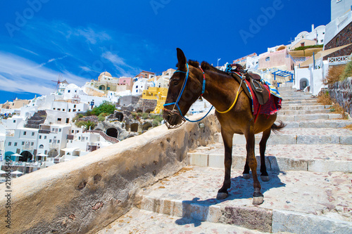 Cadres-photo bureau Ane Donkey taxis in Santorini Island, Santorini, Greece