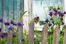Flower Purple Bell Near Old Wo...
