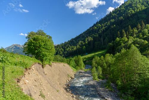 Fotobehang Olijf Fast mountain river among mountain meadows. Stream of a mountain river. Mountain plateau in Abkhazia