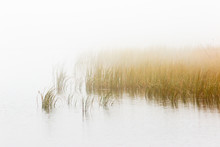 Reed Bed In Foggy Seascape