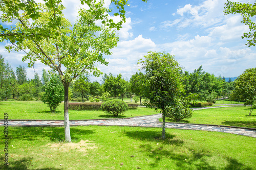 City park, green meadows and lush trees on a sunny summer day