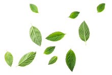 Flying Mint Leaves