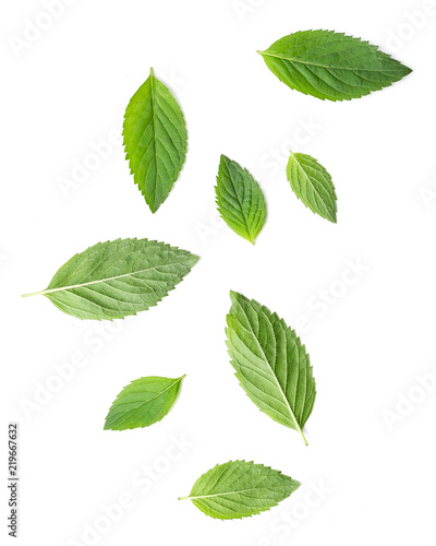 Foto op Aluminium Aromatische Small and big leaves of mint herbal