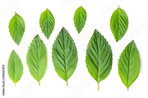 Mint different size leaves