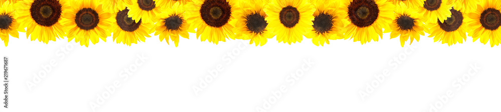 Fotografie, Obraz Yellow sunflowers background