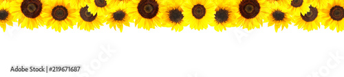 Poster de jardin Tournesol Yellow sunflowers background