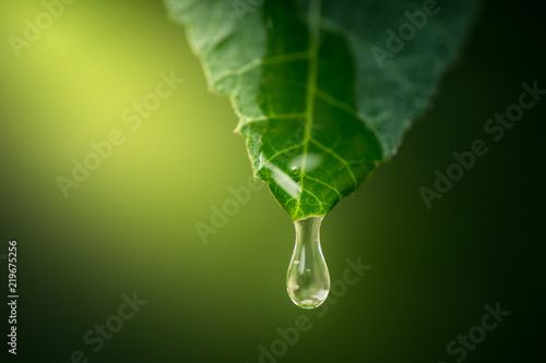 Photo green leaf with water drops