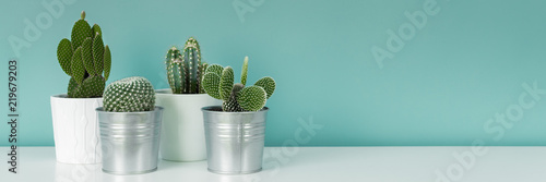 Keuken foto achterwand Cactus Modern room decoration. Collection of various potted cactus house plants on white shelf against pastel turquoise colored wall. Cactus plants banner.