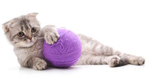 One Striped Kitten With A Ball Of Yarn.