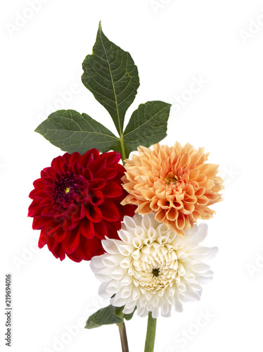 Leinwand Poster Red, orange and white dahlia flowers with leaves isolated on white background