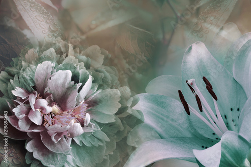 Floral background of turquoise  lily and green-violet peony.  Flowers close-up on a pink-turquoise  background. Flower composition. Nature.