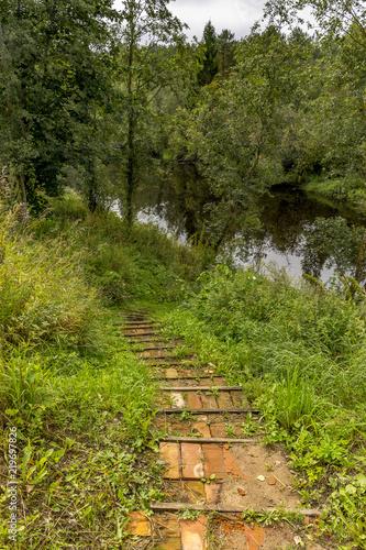 Tuinposter Weg in bos Summer morning on the banks of the river mga in the Leningrad region.