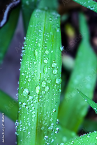 Fotografie, Obraz  Water drops on a green flower leaf with a blurred bokeh background