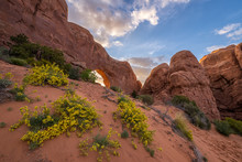 Desert Wildflowers, Rock Arch,...