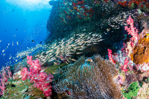 Foto op Aluminium Onder water Beautiful Clownfish and other tropical fish on a coral reef