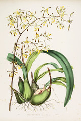Panel Szklany Botaniczne Illustration of flower