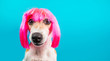 Leinwanddruck Bild - Dog in pink wig looking with contempt and suspicion. Tongue. Funny muzzle portrait. Blue background.
