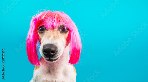 Valokuvatapetti Dog in pink wig looking with contempt and suspicion