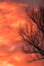 Dry Black Tree Branches Silhouetted Against An Ominous Orange Sky Image With Copy Space