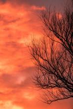 Dry Black Tree Branches Silhou...