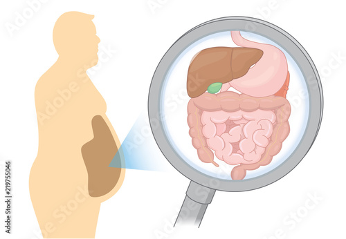 Fotografie, Obraz  Zoom in internal organ about digestion of Fat man with Magnifying glass