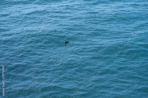 Fotografie, Obraz  Black bird on wavy sea water surface