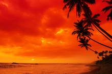 Tropical Sunset Beach Palm Tre...
