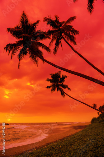 Foto op Canvas Baksteen Tropical sunset beach coconut palms silhouettes hanging over the water