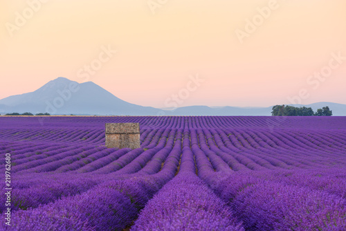 Spoed Foto op Canvas Snoeien Lavender field at sunrise Valensole Plateau Provence iconic french landscape with lonely farm house