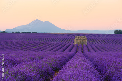 Foto op Canvas Snoeien Lavender field at sunrise Valensole Plateau Provence iconic french landscape fields with rows of blossoming lavender bushes and lonely house