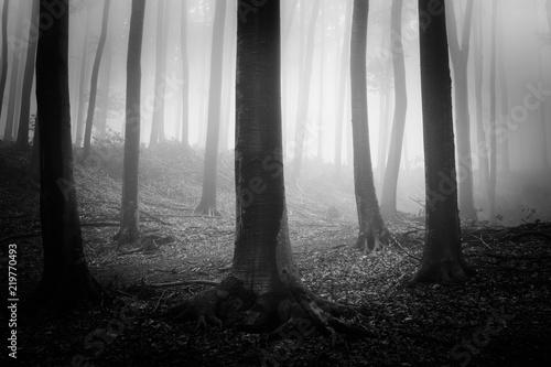 ciemne-straszne-lasy-czarno-bialy-krajobraz