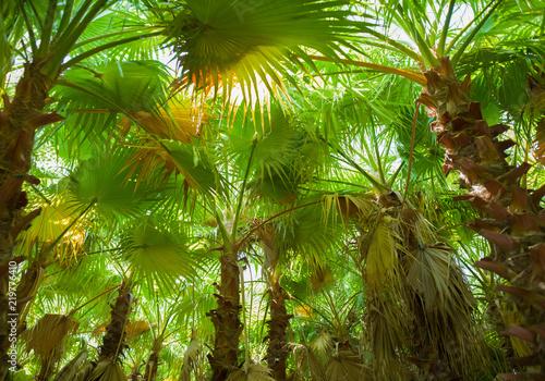 ye-il-palmiye-orman