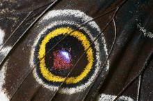 Beautiful Butterfly Wing, Macr...