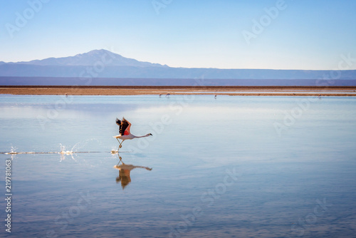 Photo Andean flamingo taking flight in Laguna Chaxa, Atacama salar, Chile