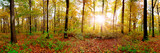 Fototapeta Na ścianę - Panorama of an autumnal forest with bright sun shining through the trees
