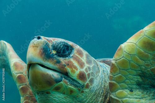 Foto op Aluminium Schildpad tortue marine