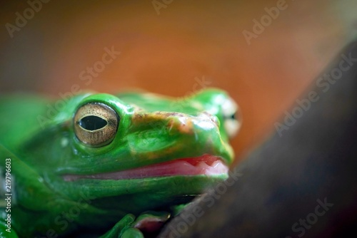 Tuinposter Kikker one green frog or toad